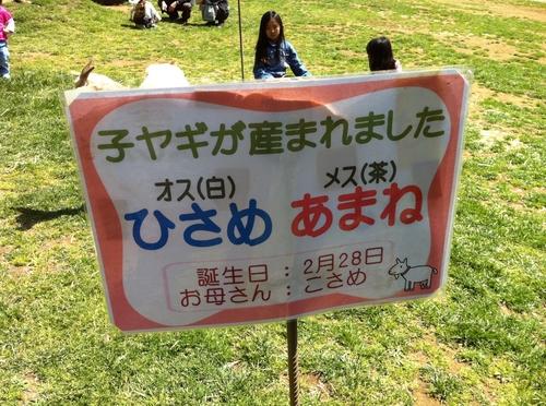ゆめ牧場 014.JPG