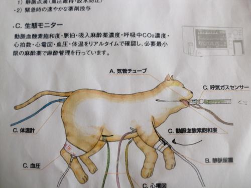 アンナ&まる避妊手術 026.jpg
